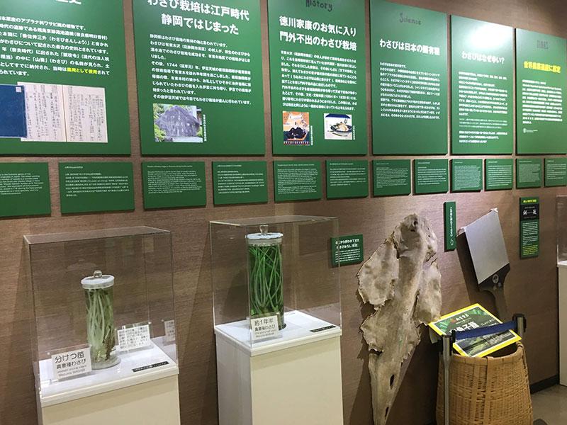 わさびの歴史や展示