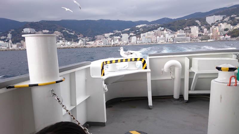 高速船の上のカモメ